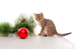 Curious kitten playing with new year ball stock images