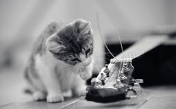 The kitten plays with a guitar string. The curious kitten plays with a guitar string stock photography
