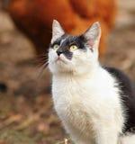 Curious kitten portrait Royalty Free Stock Photo