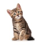 Curious kitten Stock Images