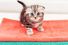 Curious kitten. Royalty Free Stock Images