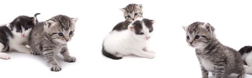 Curious kittens Stock Images