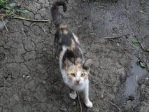 Curious Kitty. Curious cat on the ground Stock Photos