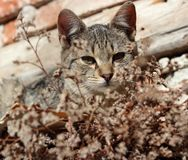 Curious kitty resting at noon Royalty Free Stock Images