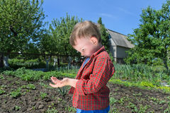 Curious little boy playing with an insect Stock Images