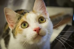 Curious little cat looks up. stock images