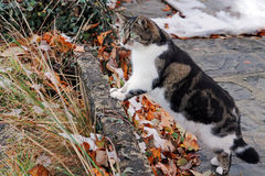 Curious little cat in winter Stock Photos