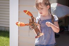 Curious little girl holding live lobster Royalty Free Stock Photo