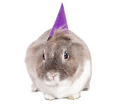 Curious little rabbit in a party hat Royalty Free Stock Photography