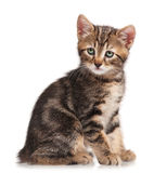 Curious little kitten Royalty Free Stock Photography