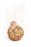 Curious little mouse on the golden ball Stock Images