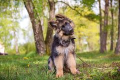 Curious little puppy. Sitting on the grass Stock Image