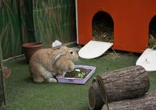 A curious little rabbit Stock Photography