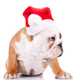 Curious little santa puppy Royalty Free Stock Photos
