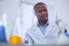Curious male scientist doing a new test. Important task. Inspired afro-american scientist doing a test while working in the lab Royalty Free Stock Photography