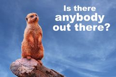 "A curious meerkat or suricate Suricata suricatta asking ""Is there anybody out there?"" Royalty Free Stock Image"