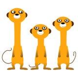 Curious meerkats Stock Images