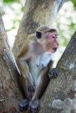 Curious monkey on tree Stock Photo