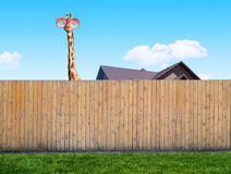 Curious neighbor royalty free stock images