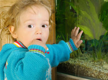 Curious one-year old standing. Curious one-year old boy with brown eyes and curly hair, standing by by aquarium Royalty Free Stock Image