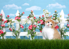 Curious orange and white kitten in flower garden Royalty Free Stock Photos