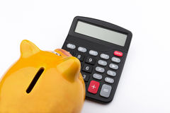 Curious piggy bank (Piggy bank and calculator). Royalty Free Stock Photography