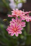 Curious Pink Flowers Stock Photos