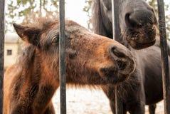 Curious pony Royalty Free Stock Photos