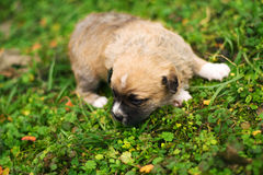 Curious puppy in the garden Stock Image