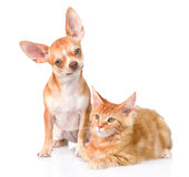 Curious puppy sitting beside kitten and looking in camera. together. isolated on white Stock Photos