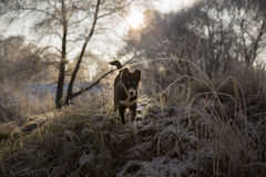 Curious puppy is walking on the snow-covered riverbank Stock Photos