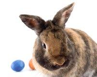 Curious rabbit Royalty Free Stock Image
