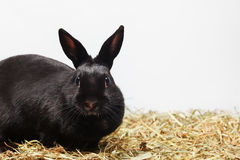 Curious rabbit background Royalty Free Stock Photo