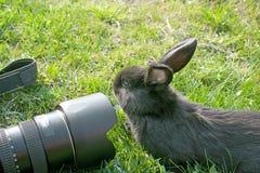Curious rabbit and the camera Stock Photos