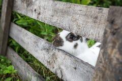 Curious rabbit Stock Image