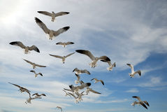Curious seagulls Stock Photography