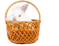 Curious rabbit in a wicker basket Stock Photo