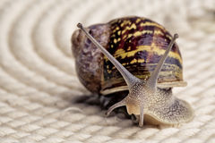 Curious Snail Stock Photo