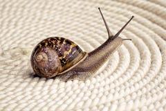 Curious Snail Stock Photo