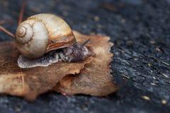 Snail in the garden Stock Photos