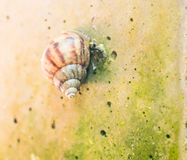 Curious snail in the garden. Close up Curious snail in the garden Royalty Free Stock Images