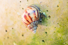 Curious snail in the garden Stock Image