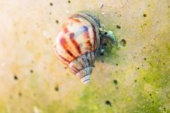 Curious snail in the garden. Close up Curious snail in the garden Stock Photography