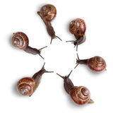 Curious snails Royalty Free Stock Photography