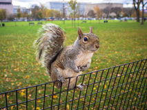 Curious squirrel hanging on park fence Stock Photo