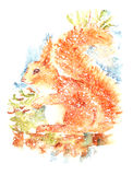 Curious Squirrel Watercolor Illustration Hand Painted on white background Royalty Free Stock Photography