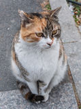 Curious Street Cat Stock Image