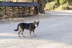 Curious street dog Stock Photo