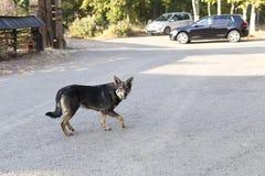Curious street dog Stock Photography