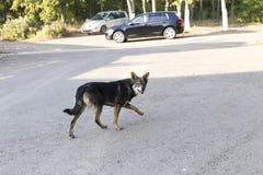 Curious street dog Royalty Free Stock Photos